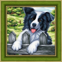 Diamond Painting Border Collie