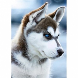 Diamond Painting Husky