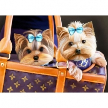 Diamond Painting Yorkshire Terriers